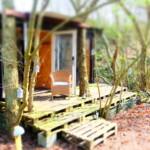 Forrest_cabin